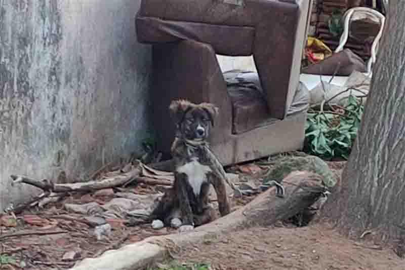 Ação da Polícia Civil resgata 16 cães vítimas de maus-tratos em Santa Maria, RS