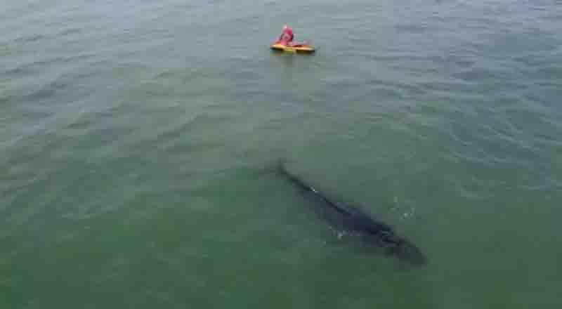 VÍDEO: baleia fica presa à rede de pesca e é salva em Barra Velha, SC