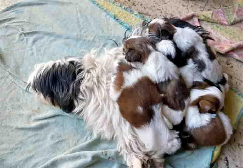 Cães em situação exploratória são resgatados de canil clandestino em Biguaçu, SC