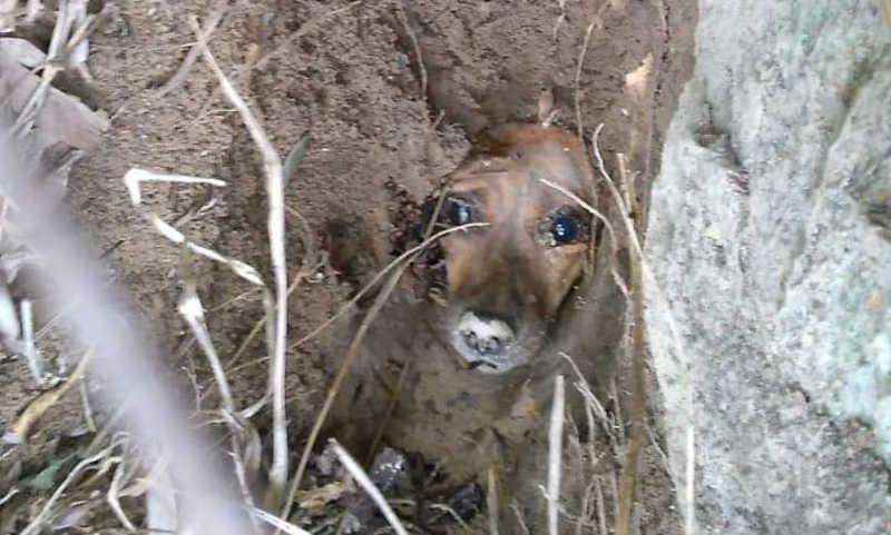 Cachorrinha é encontrada enterrada viva em terreno em Bombinhas, SC
