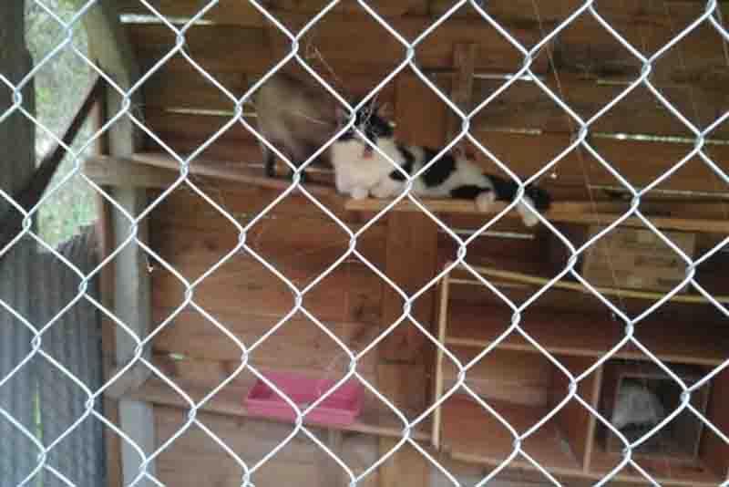 Gatos que viviam presos são resgatados de maus-tratos em Brusque, SC