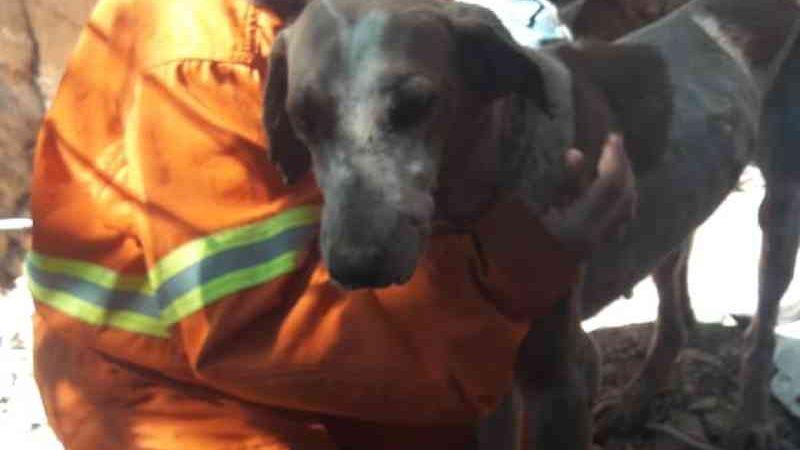 Cão estava magro e recebeu soro após o resgate em SC — Foto: Corpo de Bombeiros/Reprodução