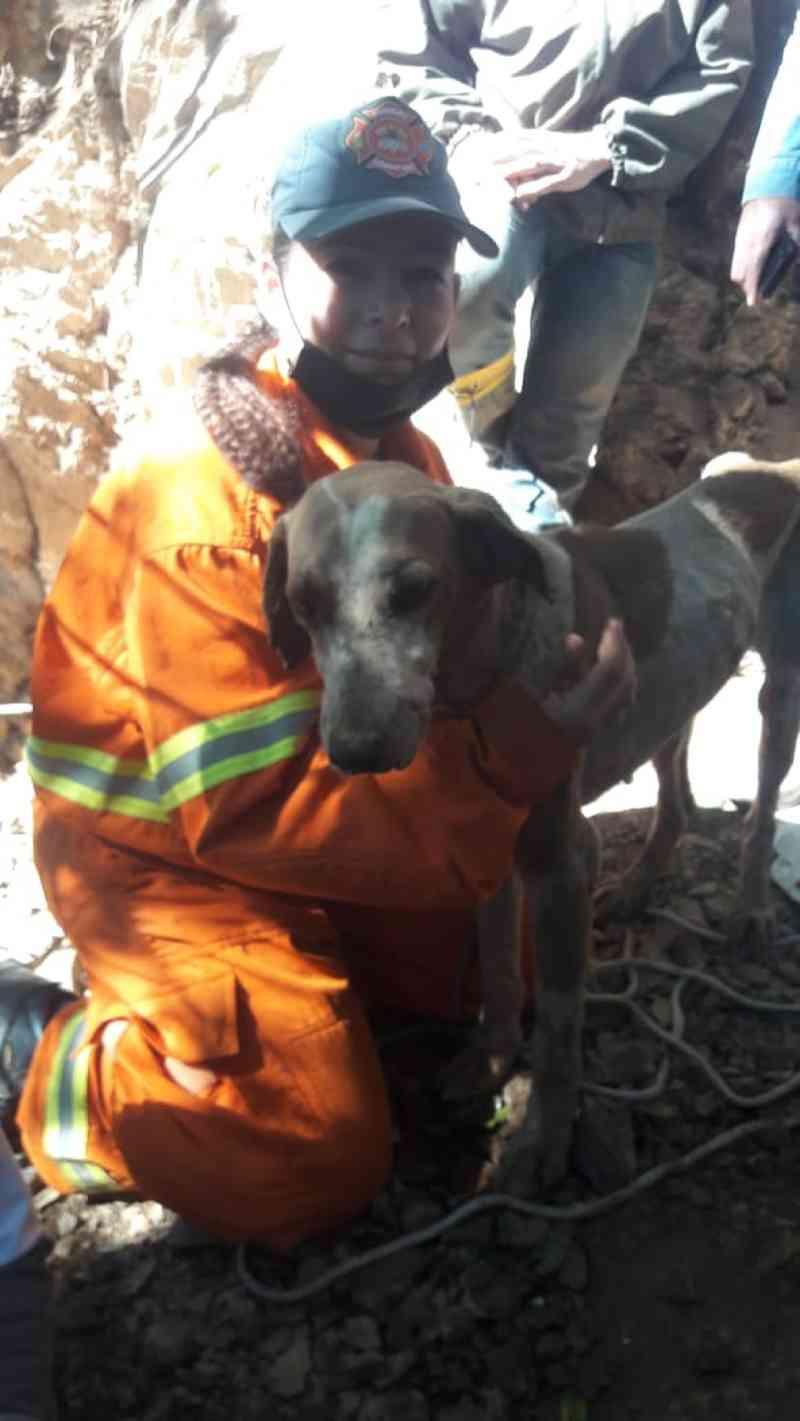 Cão 'de caça' é resgatado após ficar preso em fenda de rocha por 9 dias em SC; vídeo