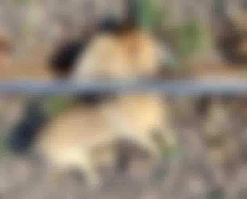 Cachorro foi decapitado após ser amarrado no trilho de trem. Foto: Frada, Divulgação.