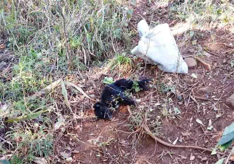 Cão é socorrido com vida após ser atropelado e jogado no mato em Ponte Serrada, SC