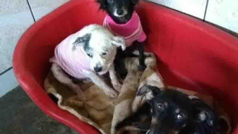 ONG Viva Bicho precisa de cobertores e camas para os animais do abrigo em Balneário Camboriú, SC
