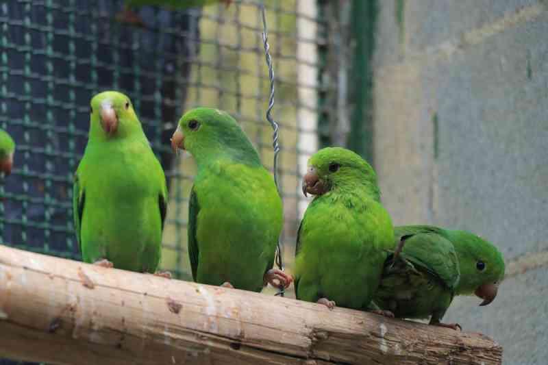 Barueri (SP) realiza a soltura de 94 aves vítimas de tráfico