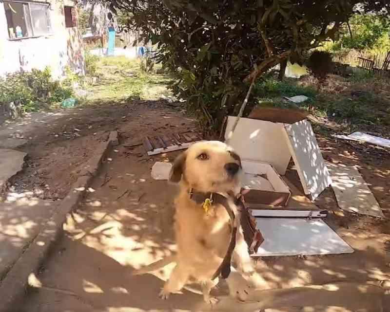 Os animais estavam amarrados. — Foto: Divulgação/Polícia Civil