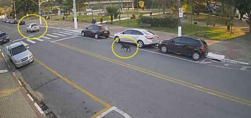 Vídeo mostra cachorro correndo atrás de carro após ser abandonado em Guararema. — Foto: Centro de Segurança Integrada de Guararema/Divulgação