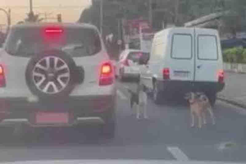Motorista é flagrado abandonando cães na frente de delegacia em Guarujá, SP; veja vídeo