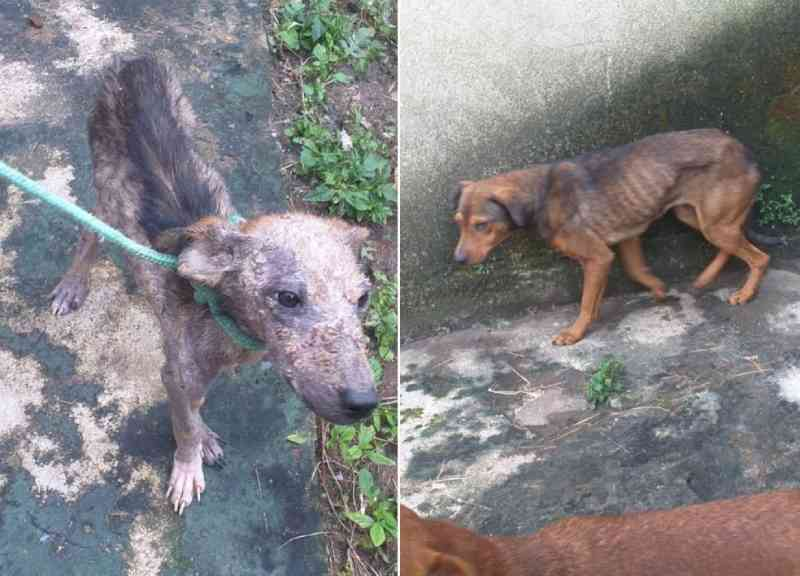 Mulher é presa e cães são resgatados com doenças e sinais de maus-tratos em Guarujá, SP