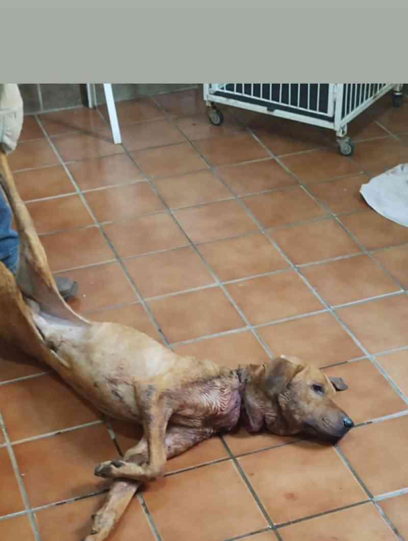 Cachorro recebendo atendimento em clínica veterinária de Jaci. — Foto: Arquivo Pessoal