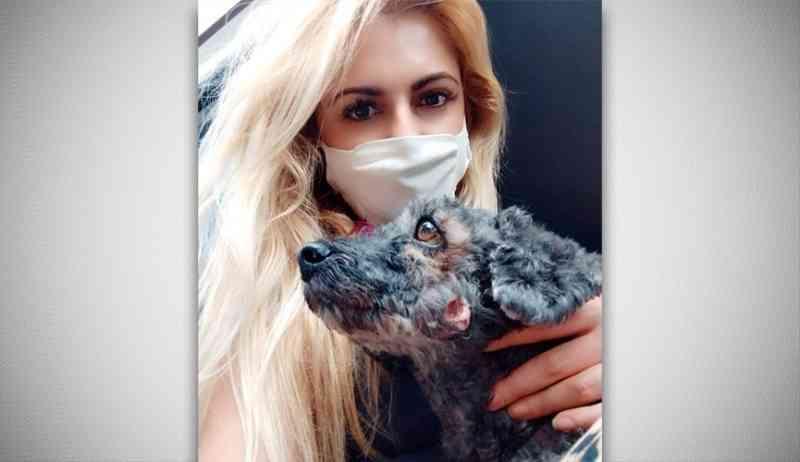 Campanha pede para que animais abandonados sejam acolhidos em Jundiaí (SP) durante frio intenso