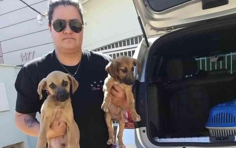 Cadela com convulsão é abandonada em canavial, em Piracicaba, SP