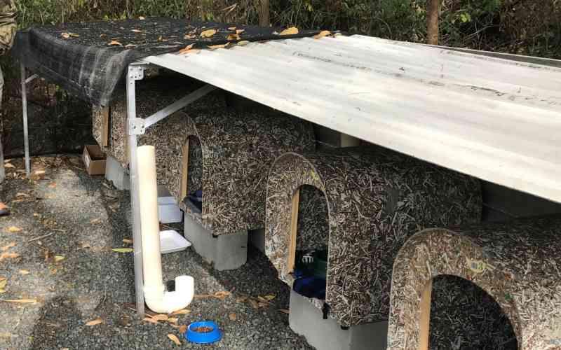 Condomínio constrói gatil para abrigar animais abandonados em SP