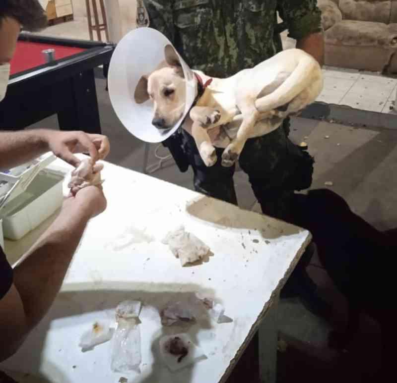 Estudantes universitários investigados por maus-tratos a cachorro castrado em república são ouvidos pela Polícia Civil