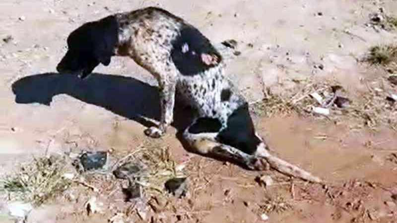 Cachorro foi encontrado rastejando em um terreno — Foto: Reprodução