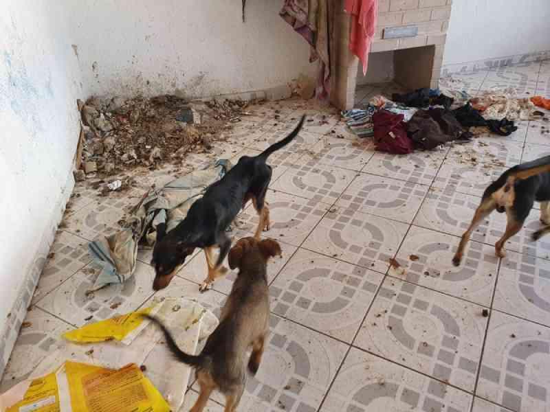 Homem é multado por manter 20 cães em situação de maus-tratos em São José dos Campos, SP