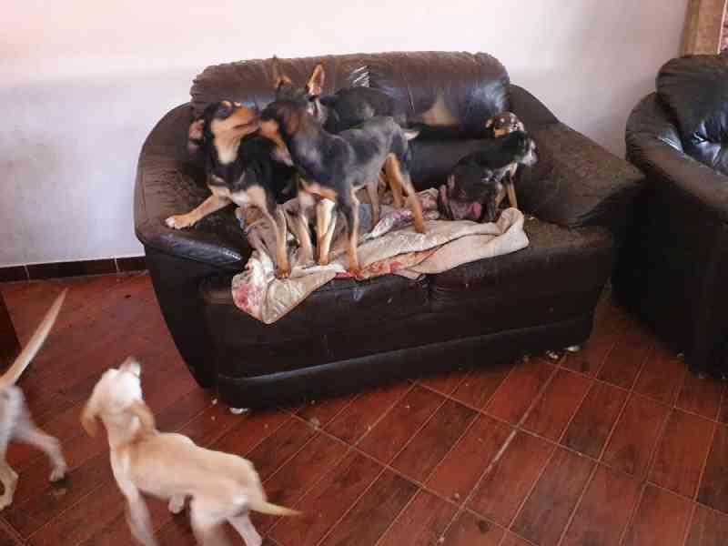 Os animais não tinham água ou comida. — Foto: Divulgação/Polícia Ambiental