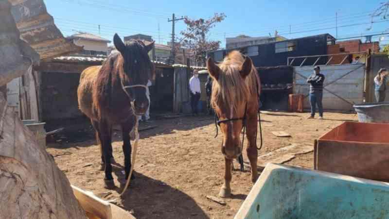 16 animais entre cães, cavalos, porcos e galinhas estavam presos em um terreno no Jardim Monte Cristo.