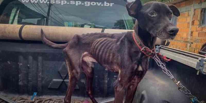 Cães em situação de desnutrição, com sarna e parasitas são resgatados; 'tutor' foi multado e preso