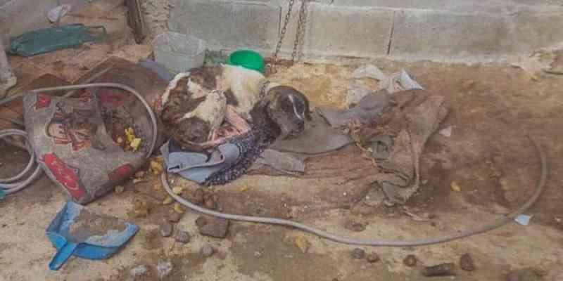 PM Ambiental fez o resgate após denuncia anônima; os animais foram destinados ao canil municipal de Ubatuba e o responsável encaminhado ao Distrito Policial de Ubatuba / Foto: Divulgação PM Ambiental