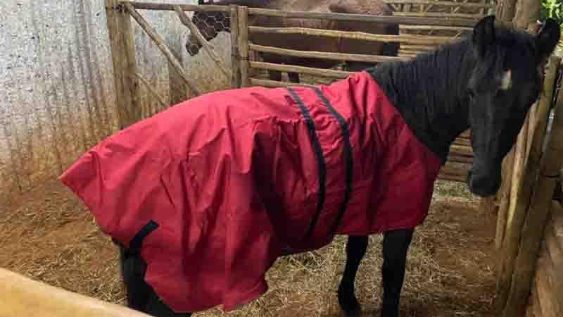 Cavalos com roupas de frio chamam a atenção em Araraquara, SP