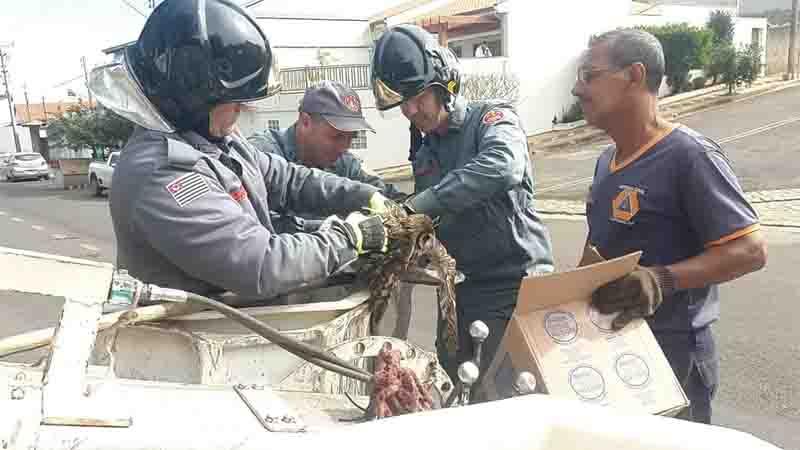 Defesa Civil e Corpo de Bombeiros de Capivari (SP) resgatam coruja presa em linha de pipa