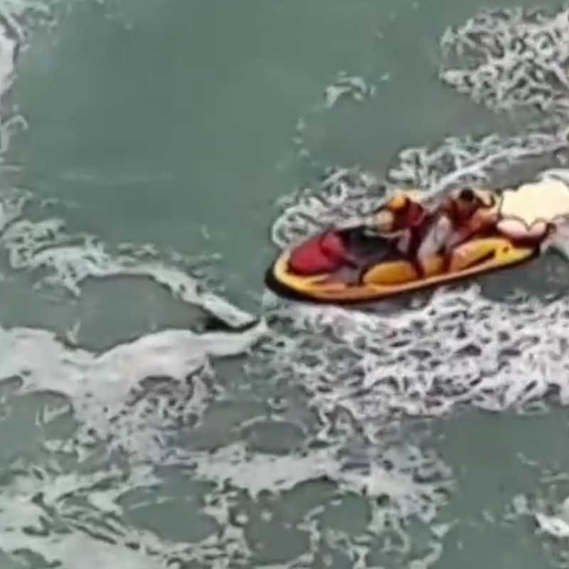 Vídeo flagra guarda-vidas salvando cachorro que se afogava no mar em SP: 'Extraordinário'