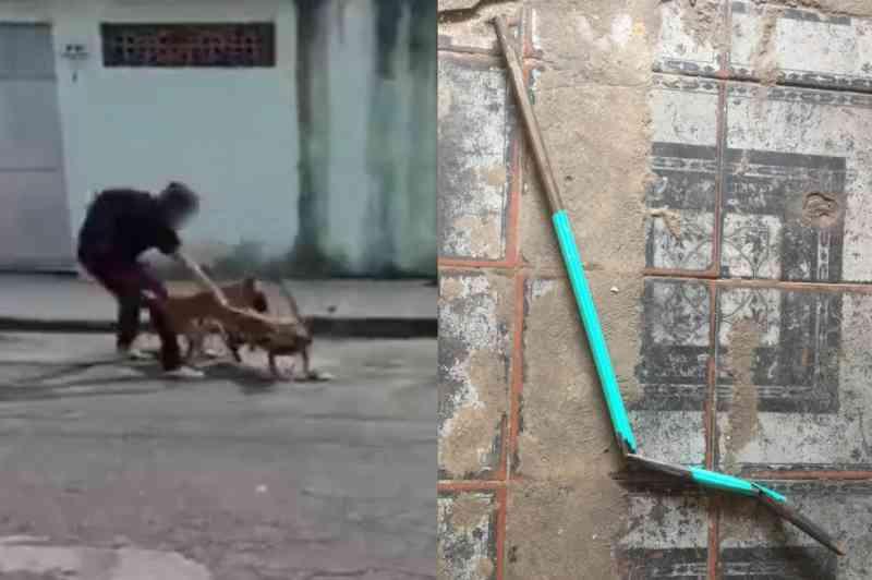 Homem é flagrado agredindo cachorro de vizinha com barra de ferro no litoral de SP; VÍDEO