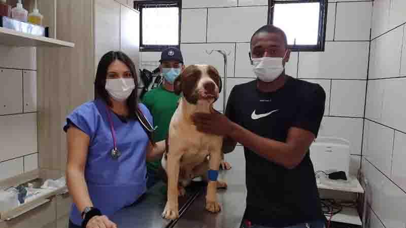 Polícia investiga caso de envenenamento de pit bull em Icém, SP