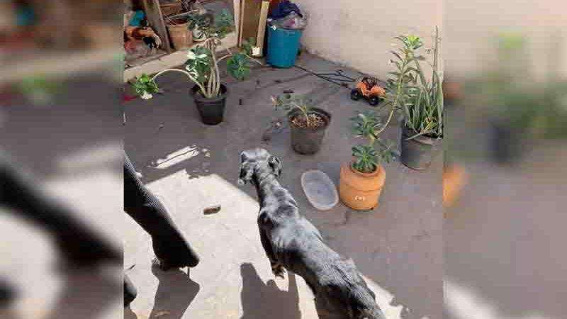 Animais foram encontrados com ferimentos, magros e sem água e comida, em Ilha Solteira (SP). Foto: Polícia Civil