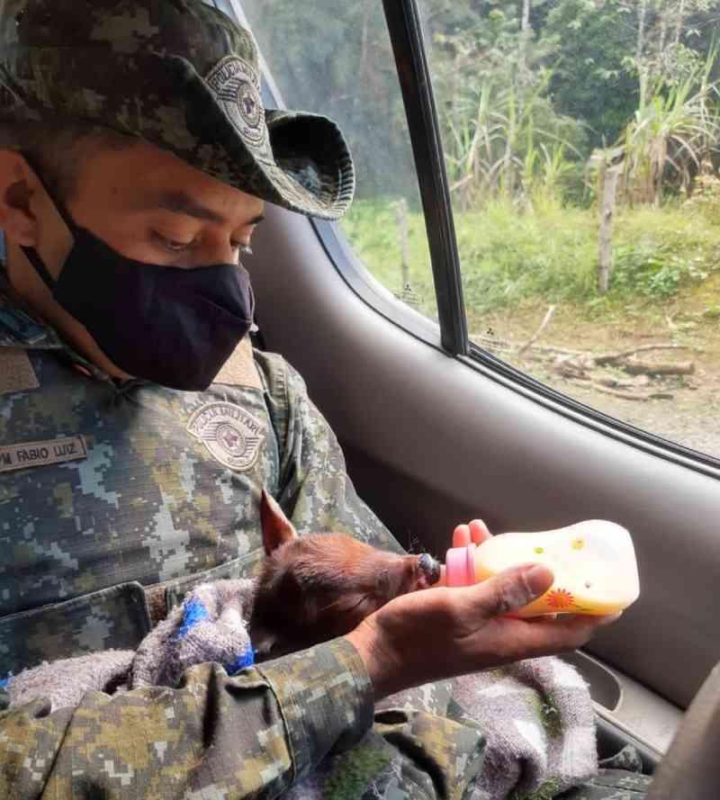 Filhote de veado que seria vendido é resgatado de cativeiro no interior paulista