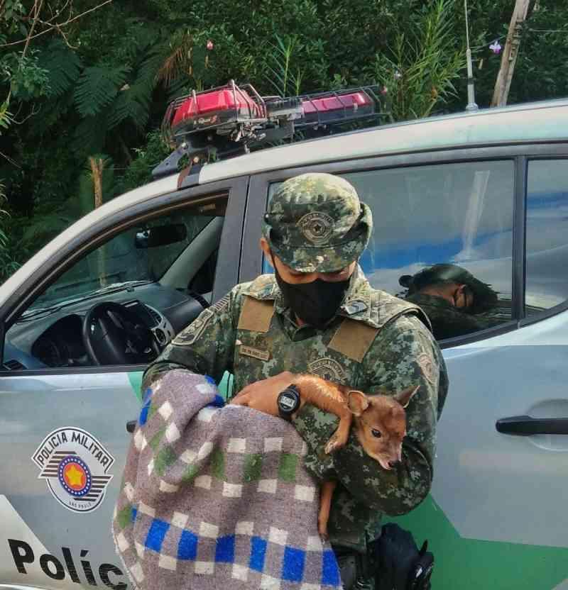 Animal foi encaminhado para o Instituto Rio Itariri, onde receberá atendimento veterinário. — Foto: Divulgação/Polícia Militar Ambiental