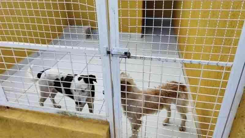 Em situação de maus-tratos, cães são resgatados pelo Canil da Guarda Municipal de Jundiaí, em SP