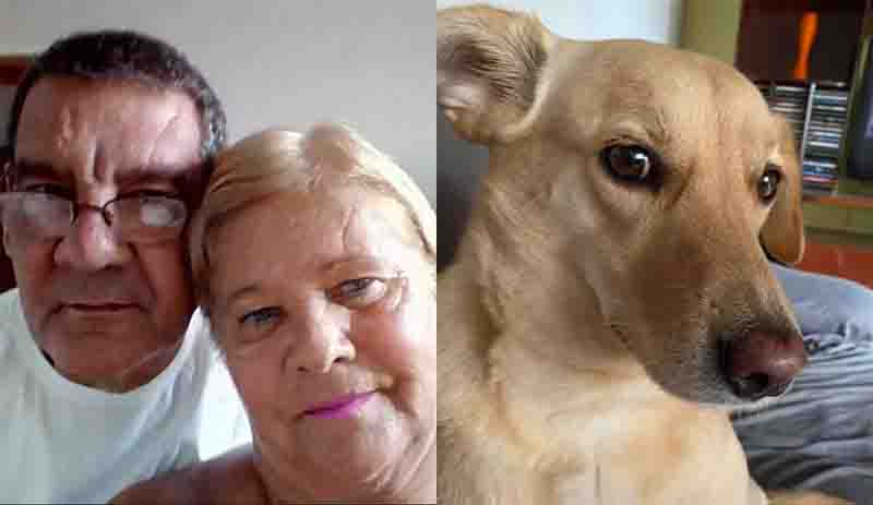 Casal morre de Covid-19 e deixa vira-lata órfã: 'Filha que eles nunca tiveram', diz amiga