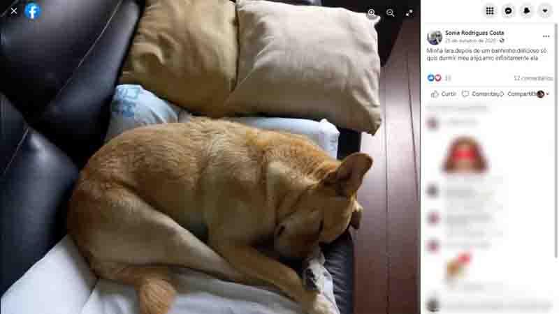 Dona publicava fotos da cadela.  Foto: Reprodução/Facebook