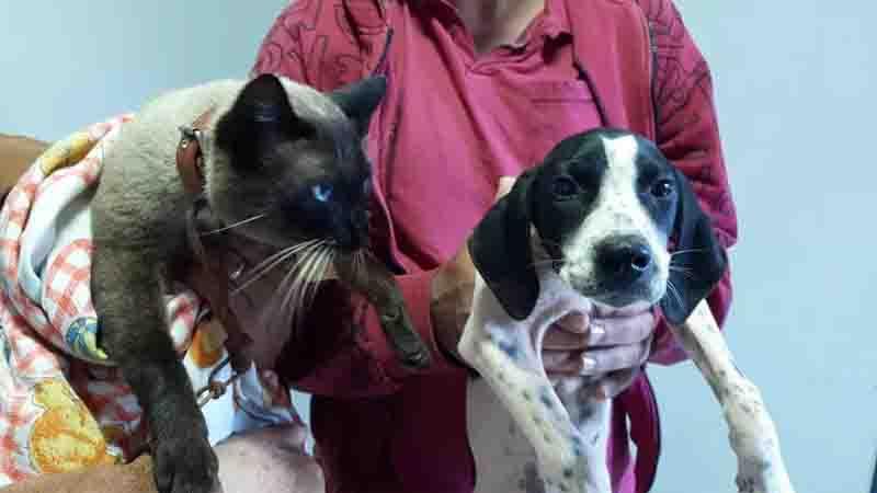 Palmital (SP) cadastra cães e gatos para ações de castração e campanhas de vacinação