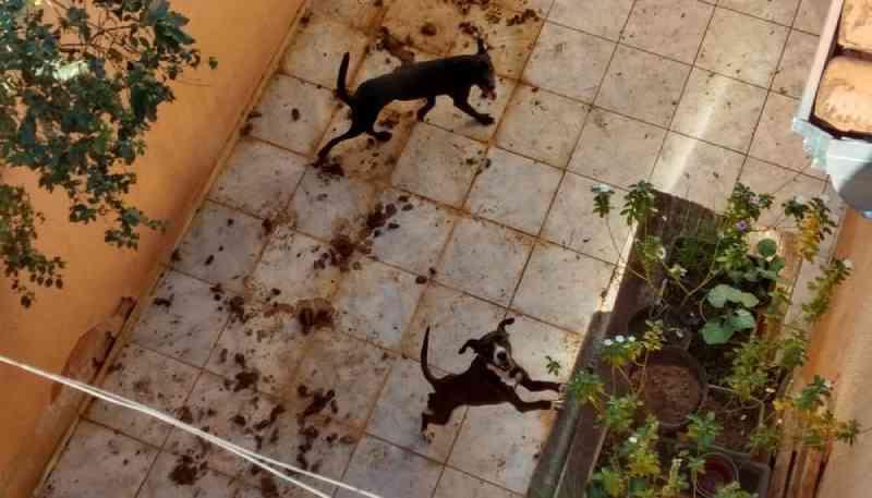 Polícia Civil prende professor de geografia por maus-tratos a animais em São José do Rio Preto, SP