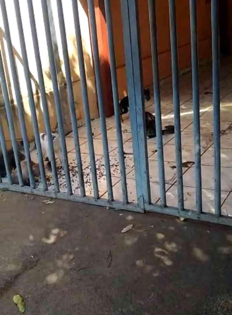 Gatos e cachorros foram resgatados em Rio Preto. — Foto: Arquivo Pessoal