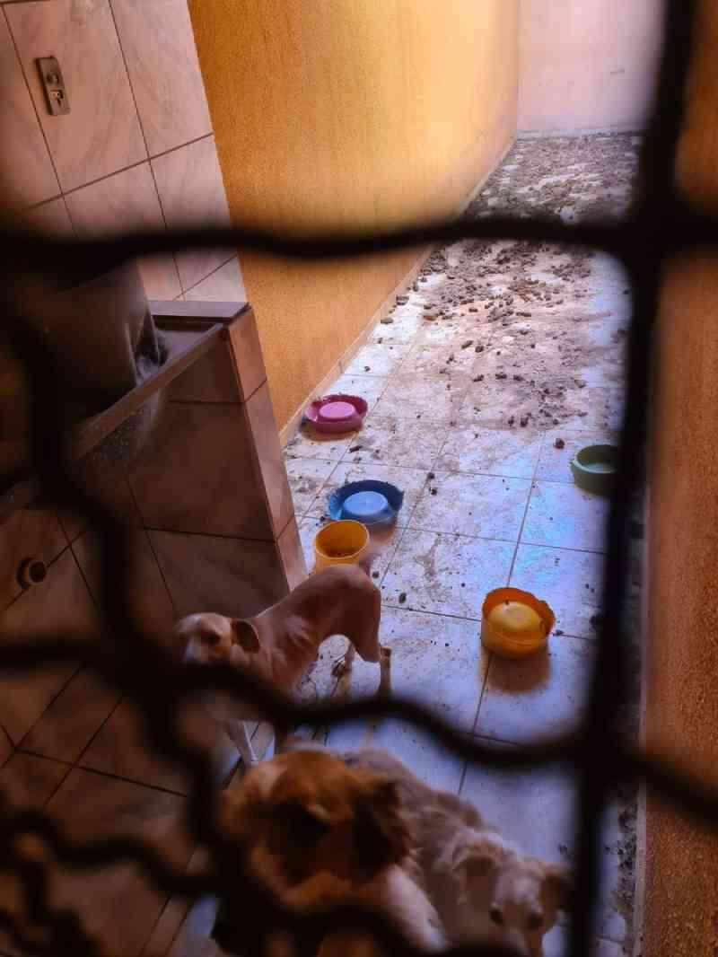 Cachorros estavam magros e sem comida há dias em Rio Preto. — Foto: Arquivo Pessoal