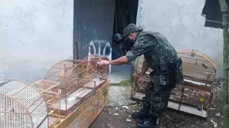 Homem é multado em mais de R$ 10 mil por manter aves silvestres em cativeiro em Praia Grande, SP