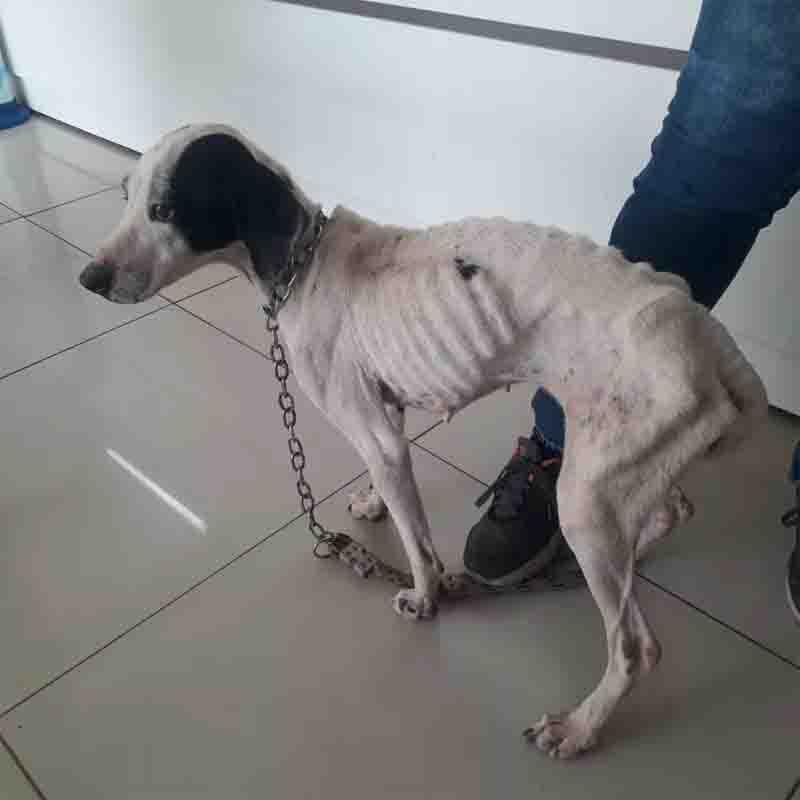 Três cães vítimas de maus-tratos são resgatados durante operação da Polícia Ambiental