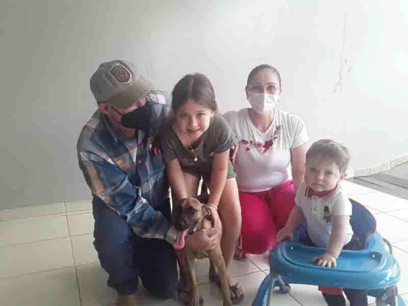 Cachorros vítimas de maus-tratos resgatados em Presidente Prudente (SP) são adotados e ganham novos lares
