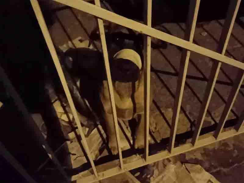 Homem recebe multa de R$ 3 mil por maus-tratos a animal. Foto: Polícia Ambiental