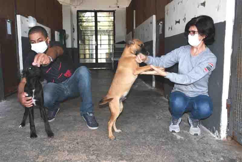Cães vítimas de maus-tratos em Presidente Prudente passaram por avaliação médica no CCZ. Foto: Marcos Sanches/Secom