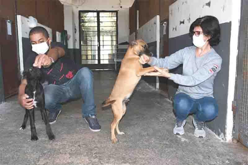 Cães vítimas de maus-tratos em Presidente Prudente (SP) passam por avaliação médica no CCZ