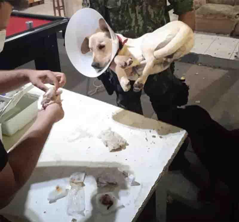 Polícia Civil finaliza inquérito sobre castração irregular de cão em república e indicia universitários por maus-tratos