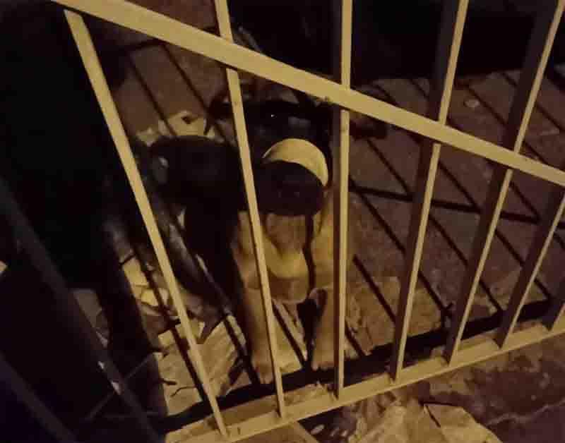 Homem é multado em R$ 3 mil por agredir e amordaçar cachorro com fita adesiva em Presidente Prudente, SP