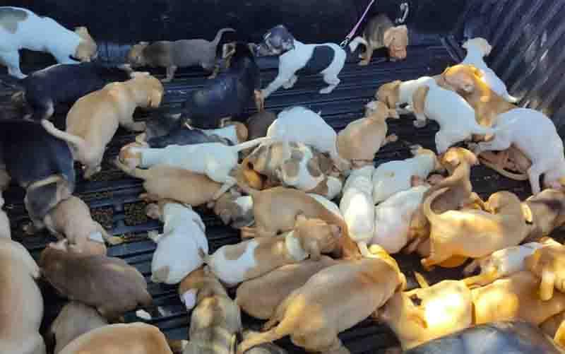 Após resgate de 80 cães em casa, moradoras são investigadas por maus-tratos em Ribeirão Preto, SP